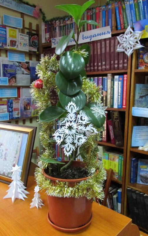 Фикус, украшенный новогодней мишурой.
