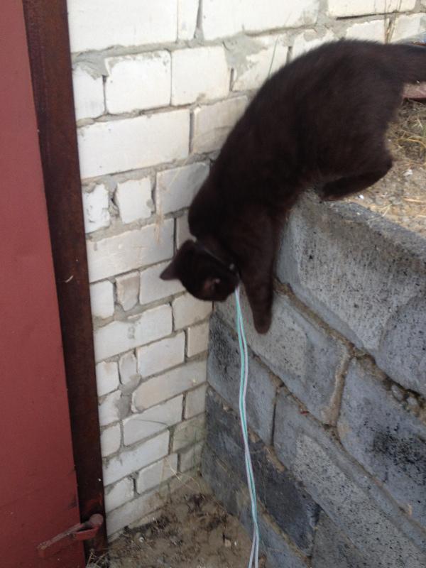 Коричневая кошка на веревке прыгает с кирпичной кладки.