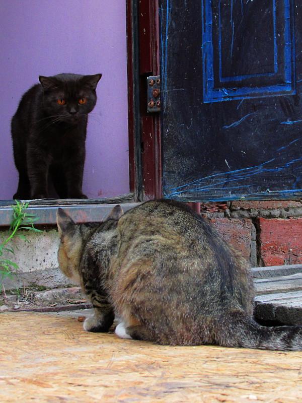 Серый кот и коричневая кошечка смотрят друг на друга через порог.