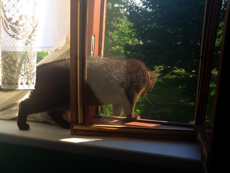 Кошка пытается вылезти в приоткрытое окно.