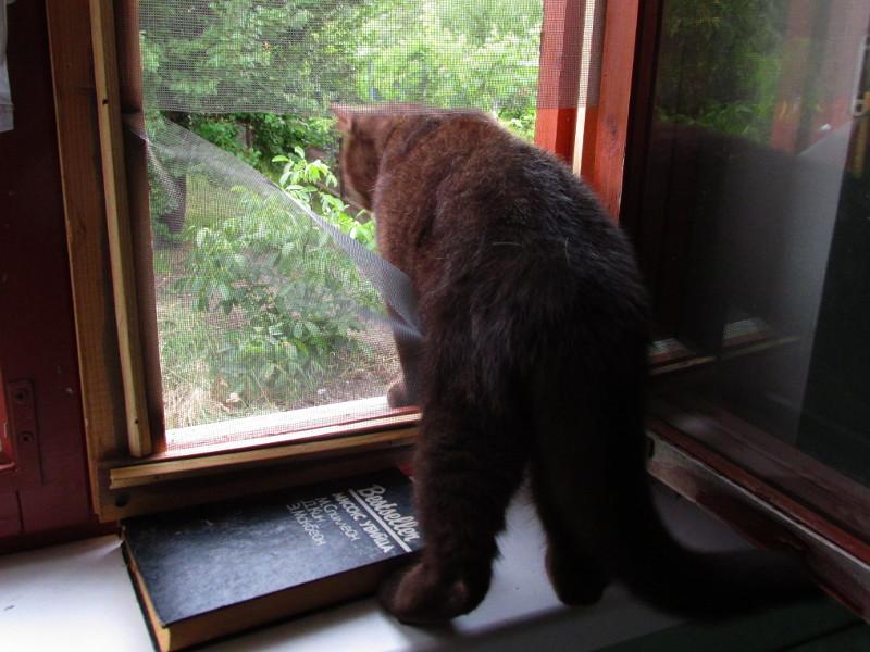 Кошла разодрала сетку на окне и смотрит вниз.
