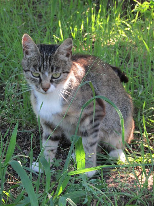 серая кошка, сидящая в траве.