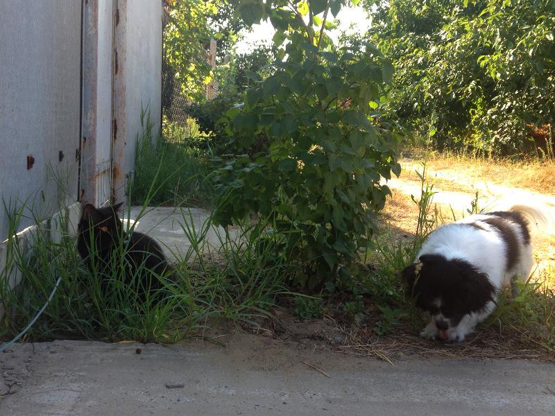 Маленькая собачка и кошка на прогулке.