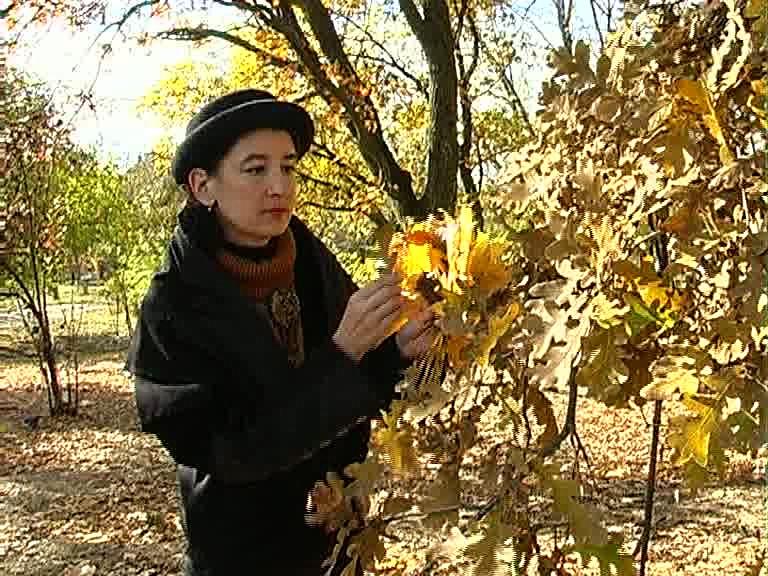 Фотохудожница рвет осенние листья.