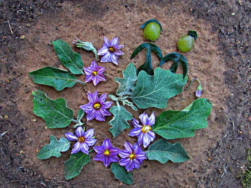 Фото-картинка - парочка- из фиолетовых цветов и зеленых листьев.