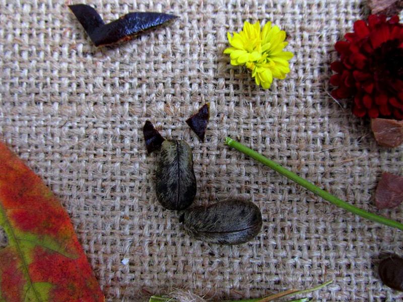 Ушки для котика на фото-картинке из растений.