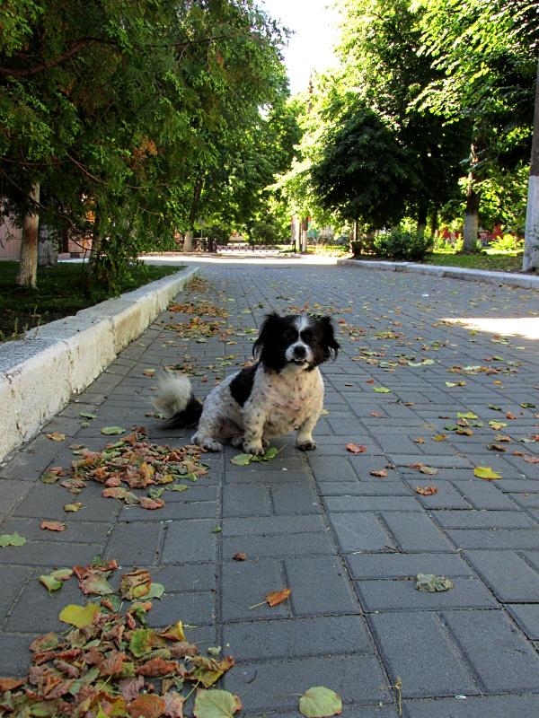 Собачка сидит на аллее парка.