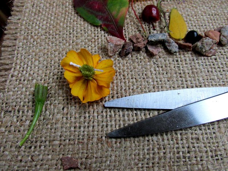 Чернобривец с обрезанным стеблем для флористической композиции.